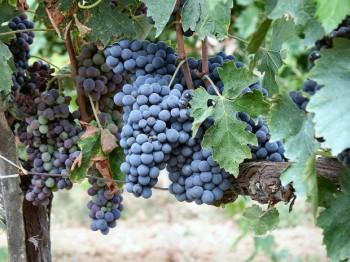 Hara Wine